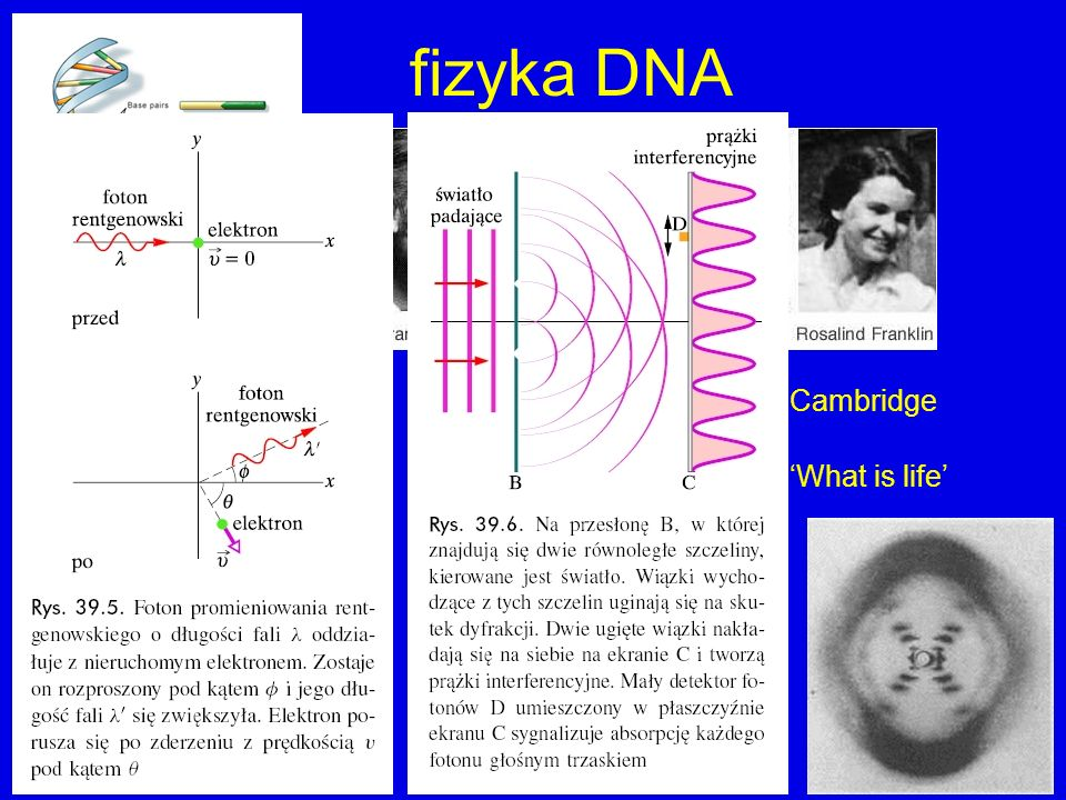 fizyka DNA Cavendish Laboratory, Cambridge