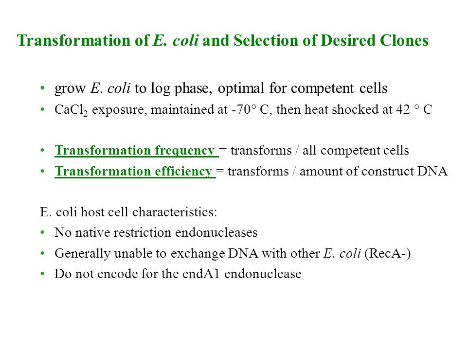 Transformation of E. coli and Selection of Desired Clones
