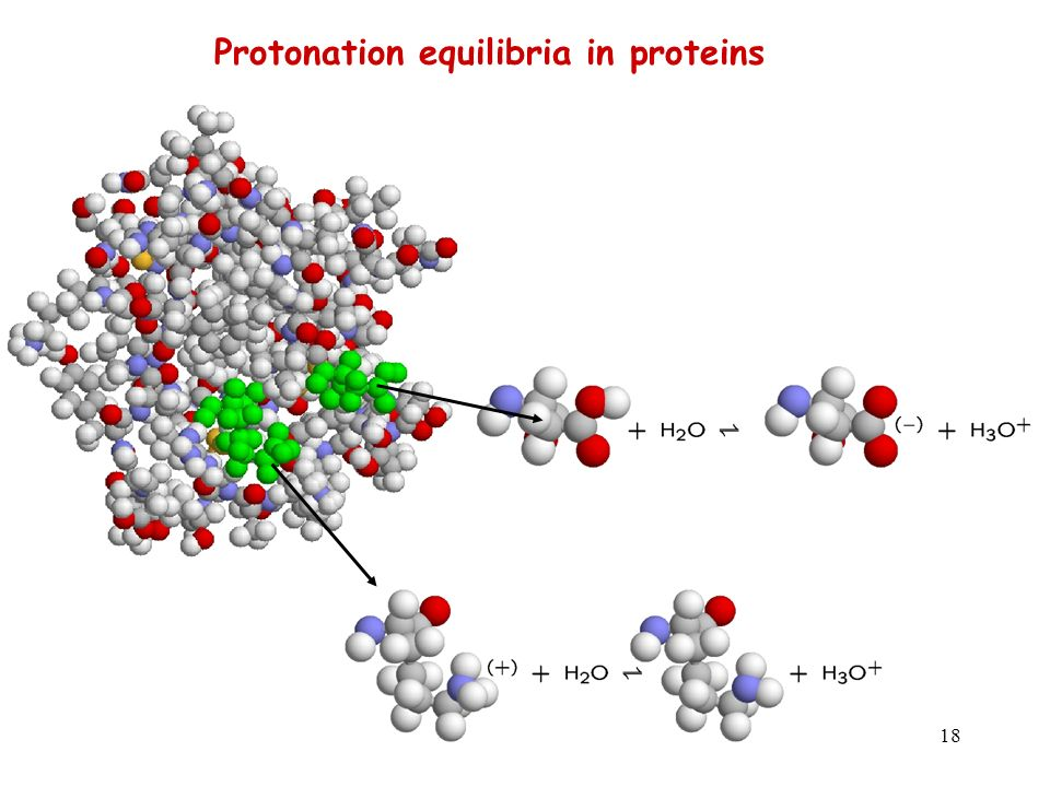Protonation equilibria in proteins