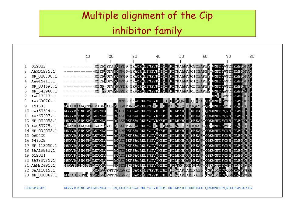 Multiple alignment of the Cip inhibitor family