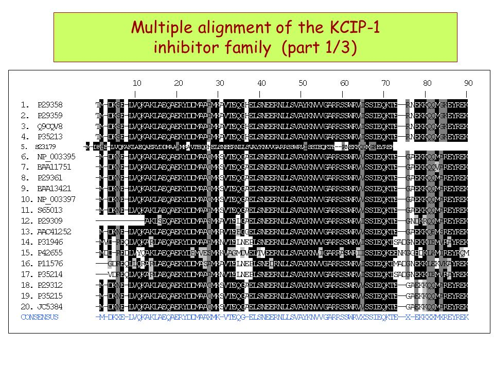 Multiple alignment of the KCIP-1 inhibitor family (part 1/3)