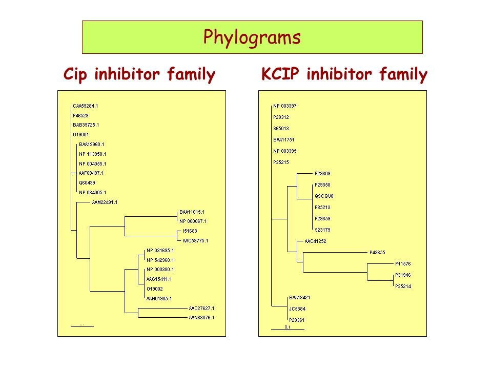 Phylograms Phylograms Cip inhibitor family KCIP inhibitor family