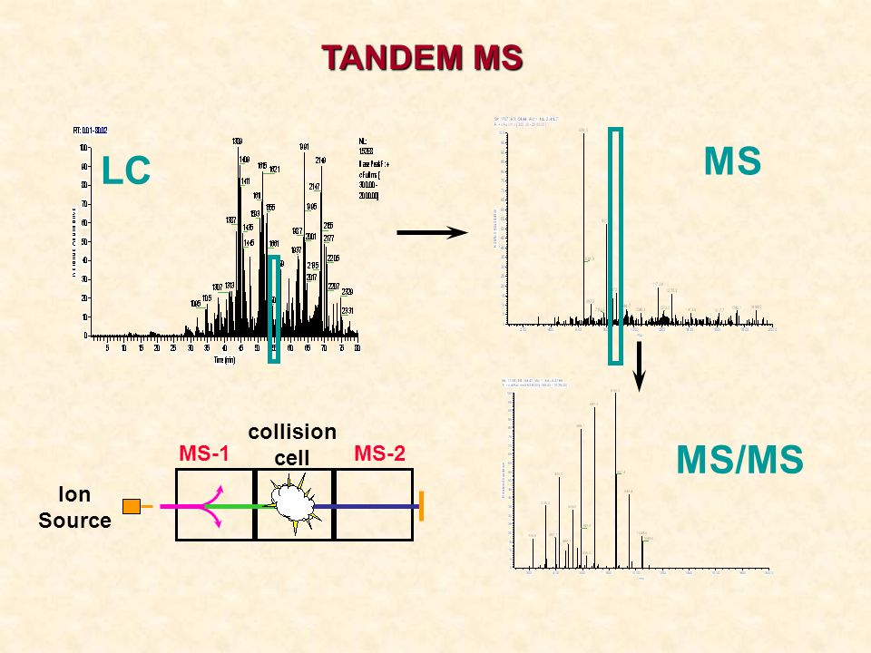 TANDEM MS MS LC Ion Source MS-1 collision cell MS-2 MS/MS