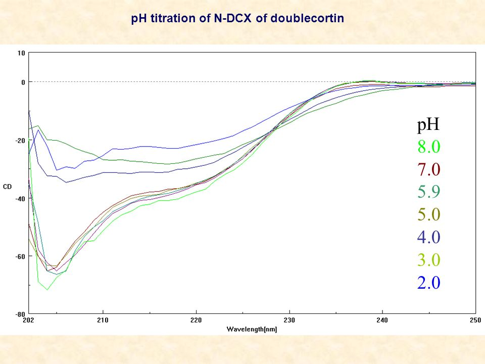 pH titration of N-DCX of doublecortin