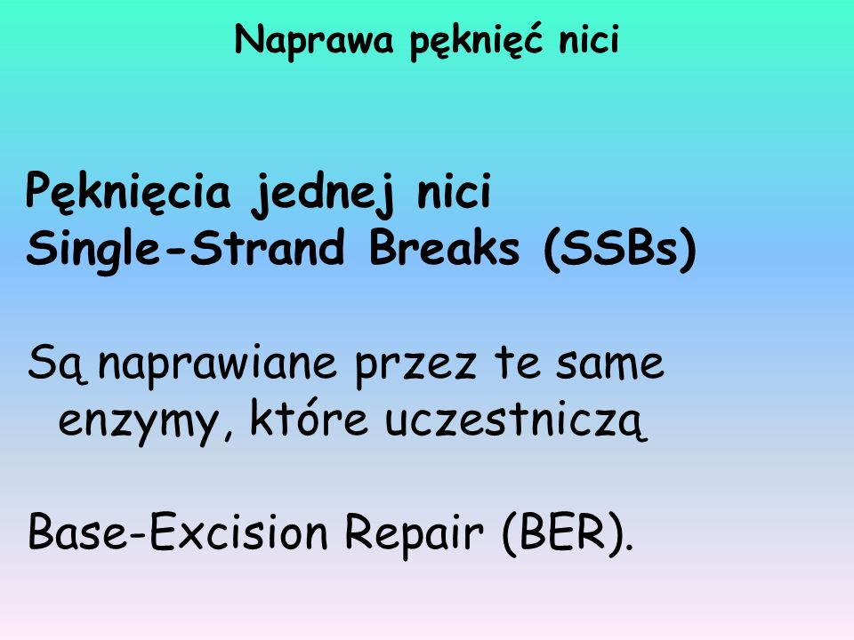 Single-Strand Breaks (SSBs)