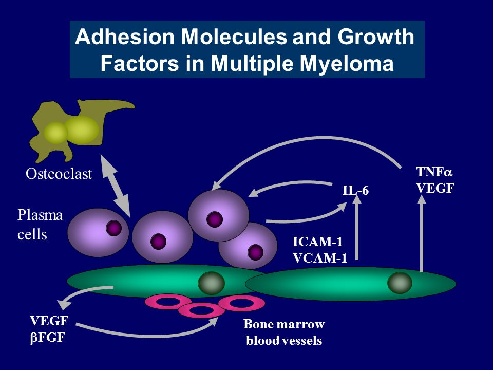 Adhesion Molecules and Growth Factors in Multiple Myeloma
