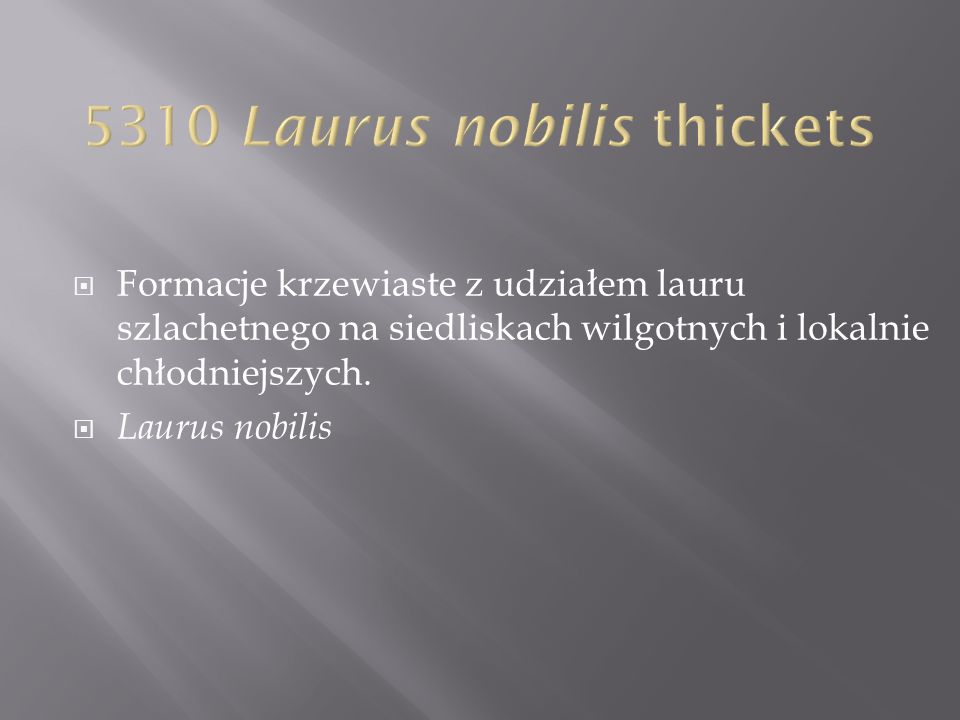 5310 Laurus nobilis thickets