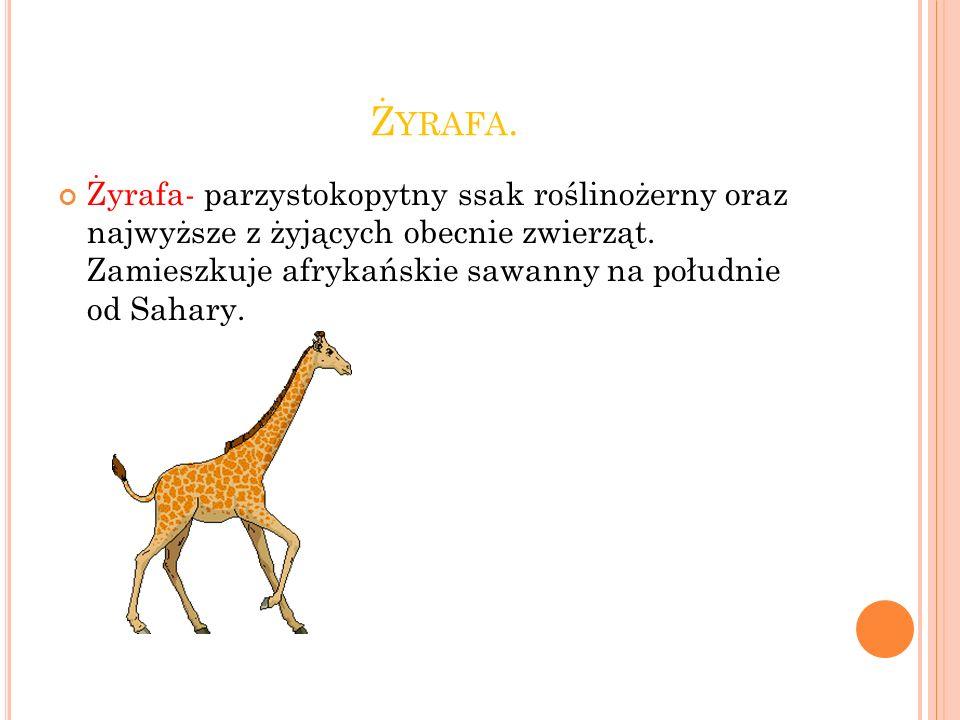 Zoo Na Wesoło Ppt Video Online Pobierz