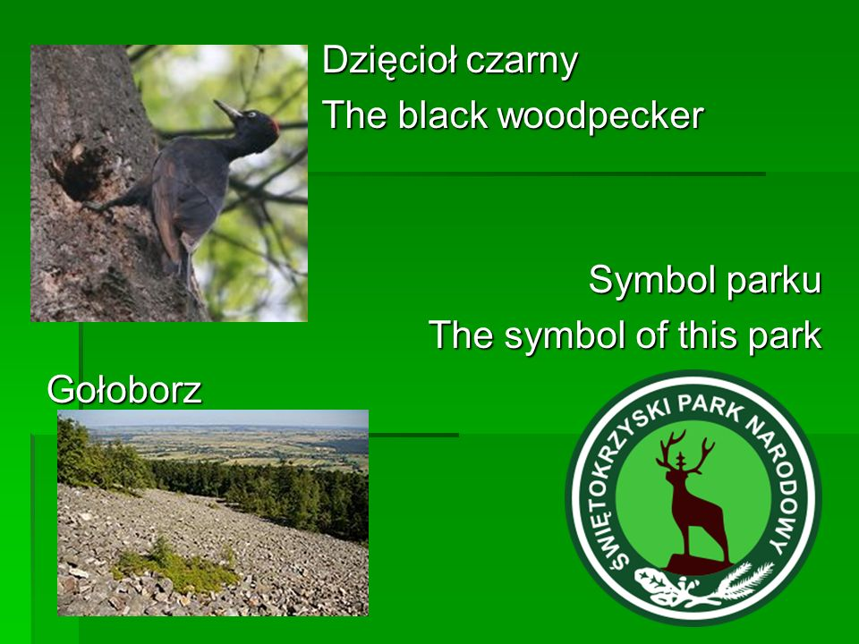 Dzięcioł czarny The black woodpecker Symbol parku The symbol of this park Gołoborz