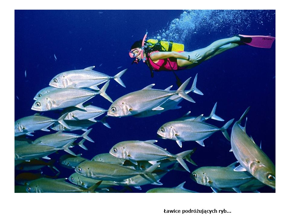 Big fish action… Liz how good is the Shot with the Trevally and the girl looking up
