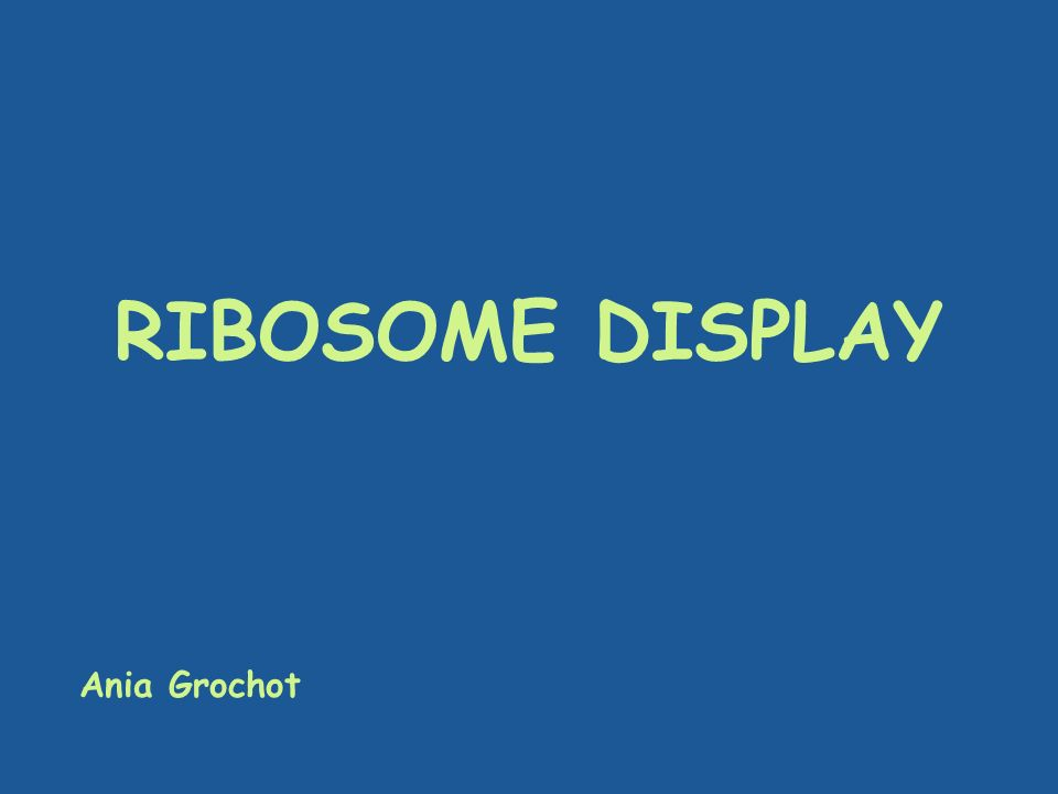 RIBOSOME DISPLAY Ania Grochot