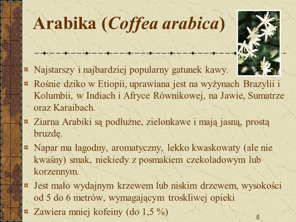 Arabika (Coffea arabica)
