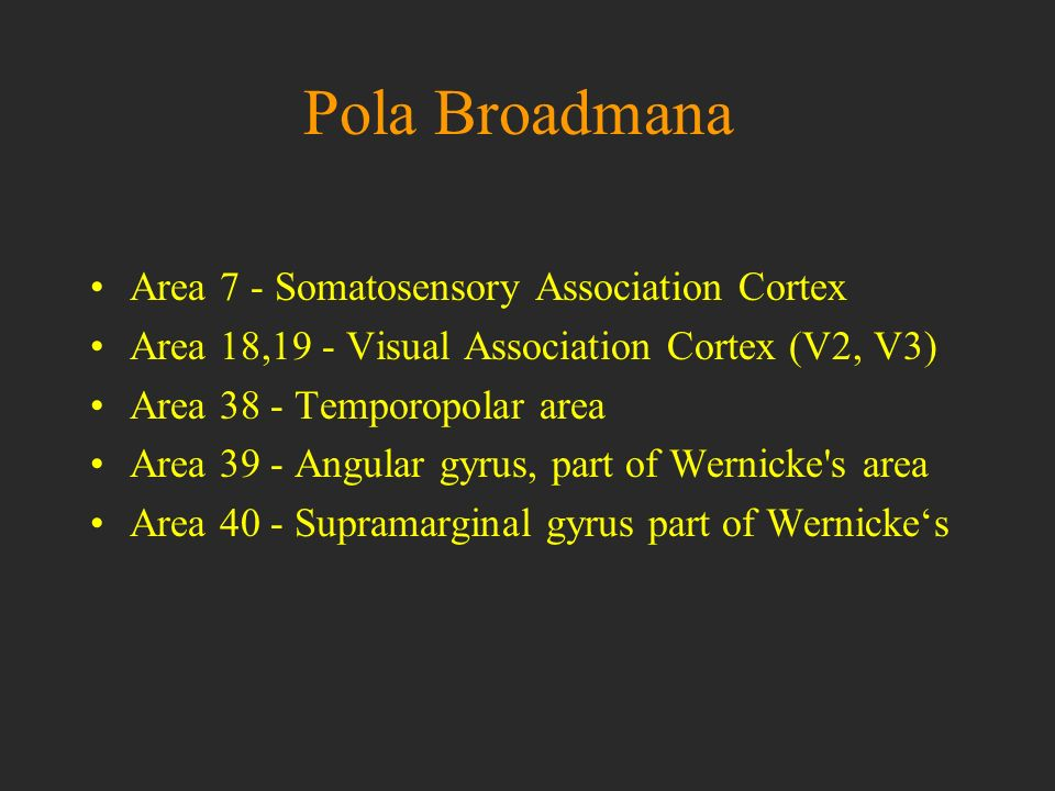 Pola Broadmana Area 7 - Somatosensory Association Cortex