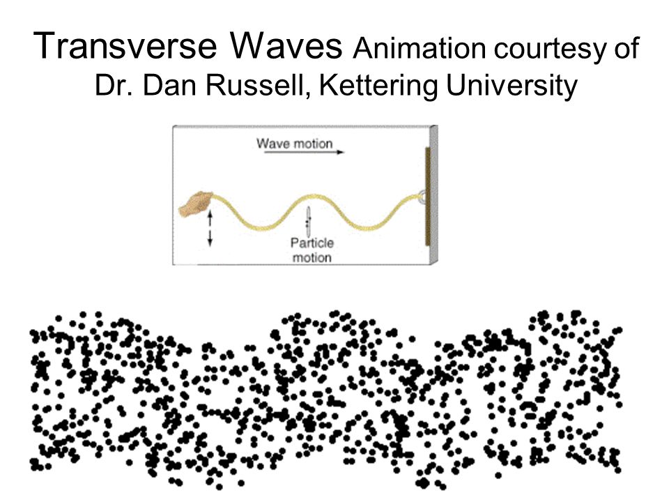 Transverse Waves Animation courtesy of Dr